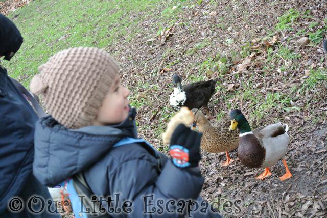 Ducks22