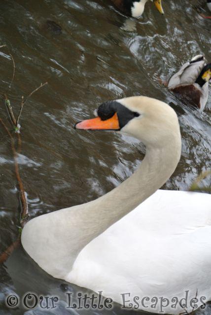 Ducks3