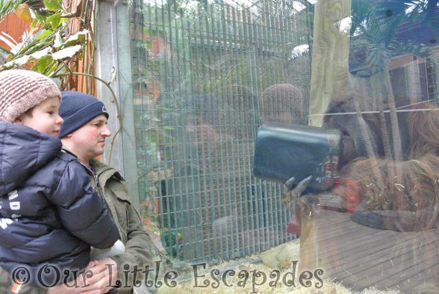Zoo_22