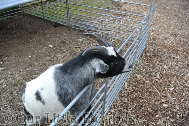The Elveden Mini Farm