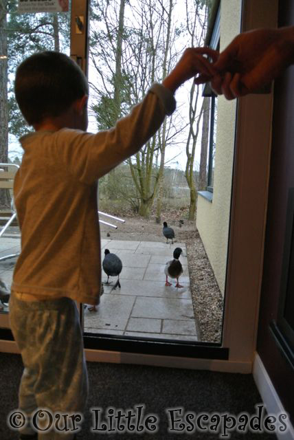 The Ducks at Elveden Forest Center Parcs