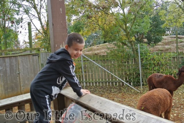 ColchesterZooHalloween_21