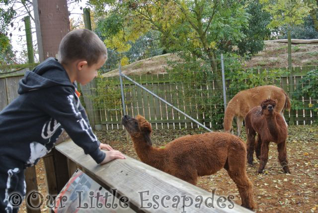 ColchesterZooHalloween_22