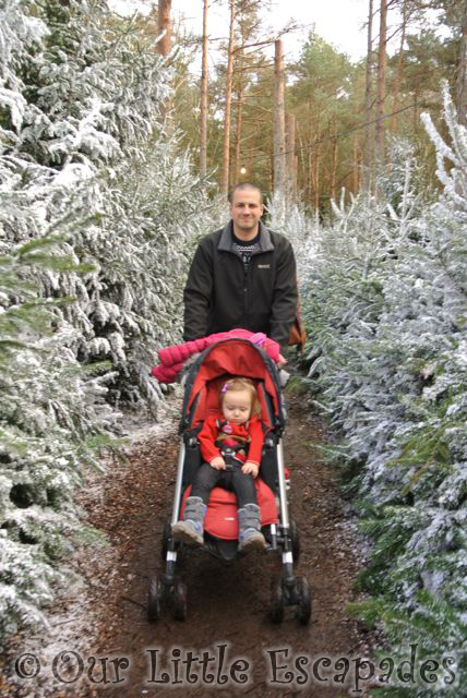 darren little e lapland uk snowy christmas tree walk