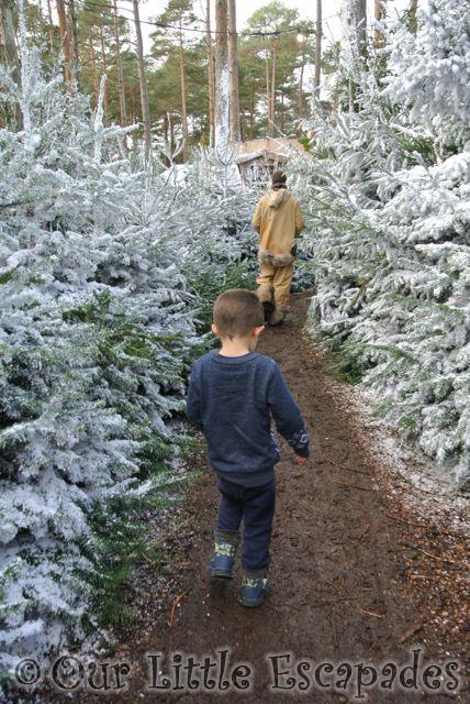 ethan snowy christmas tree walk