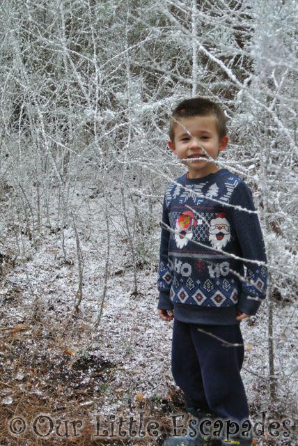 ethan snowy trees