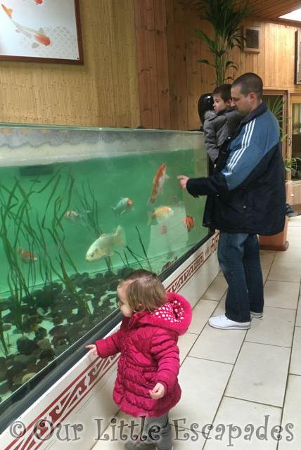 Koi_Colchester_Zoo1