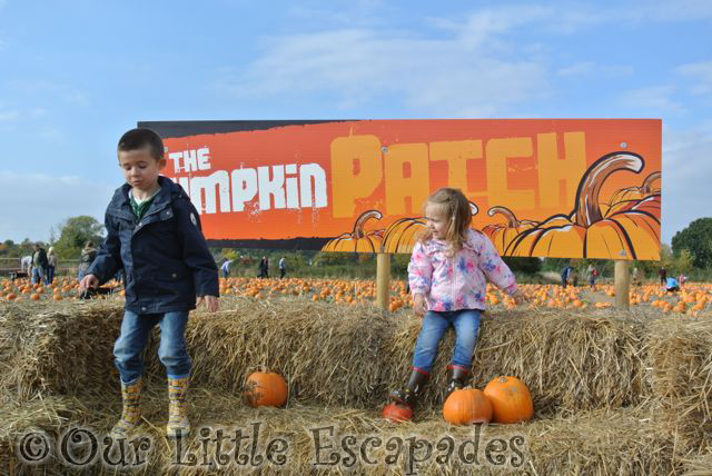 ethan little e pumpkin patch foxes farm colchester