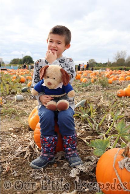 pumpkin patch colchester foxes farm