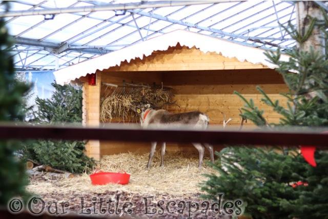 st johns clacton santa express live reindeer christmas wonderland