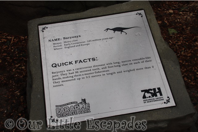 world of dinosaurs baryonyx facts paradise wildlife park