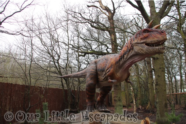 world of dinosaurs carnotaurus paradise wildlife park
