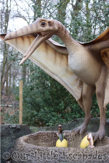 world of dinosaurs pteranodon paradise wildlife park