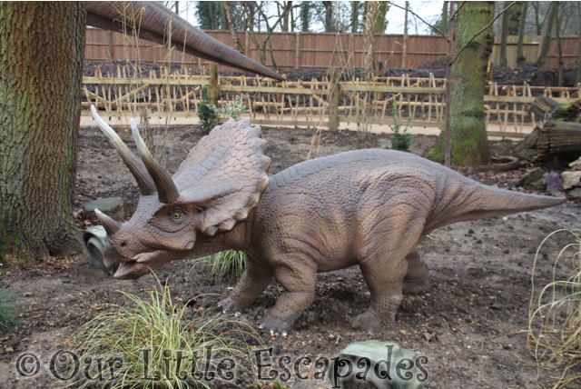 world of dinosaurs triceratops calf paradise wildlife park