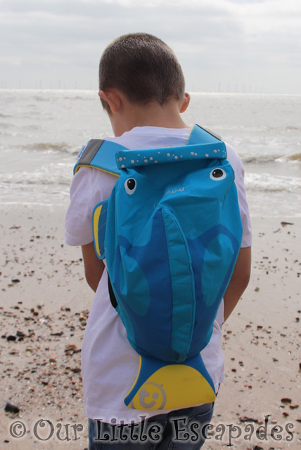 trunki paddlepak tang tropical fish