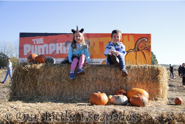 colchester pumpkin patch foxes farm hay bale ethan little e