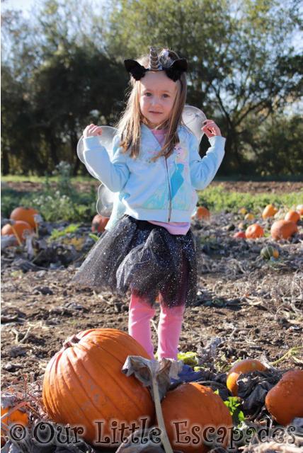 little e foxes farm pumpkin patch