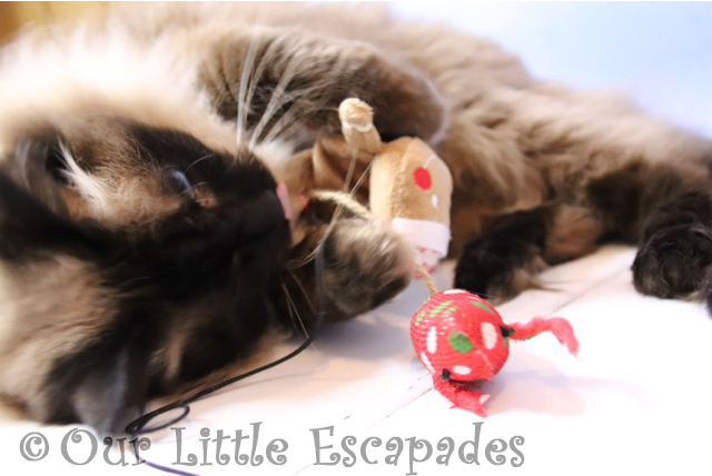 christmas gifts for your cat trinity