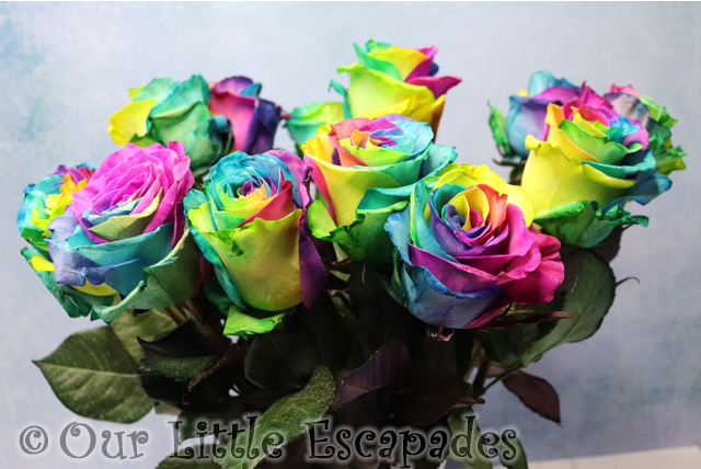 rainbow roses bouquets blossoming gifts
