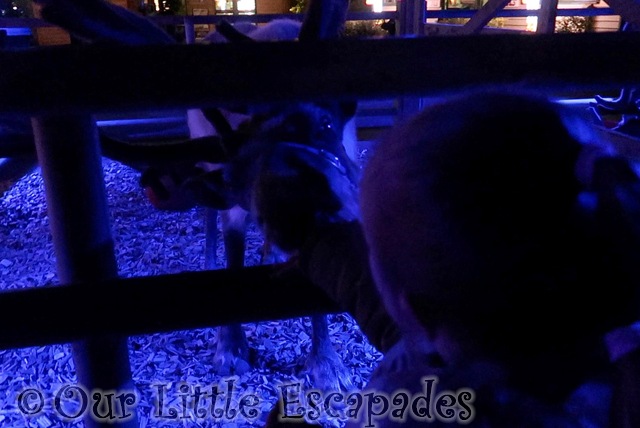 twilight christmas experience colchester zoo feeding reindeer