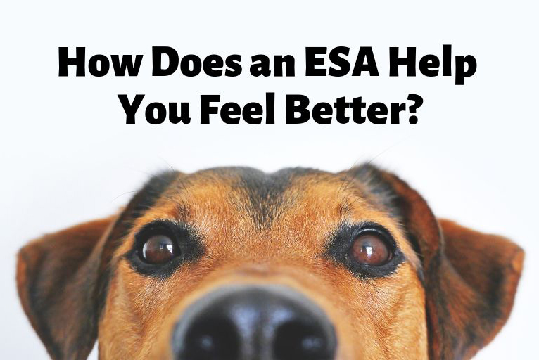 how does an esa help you feel better