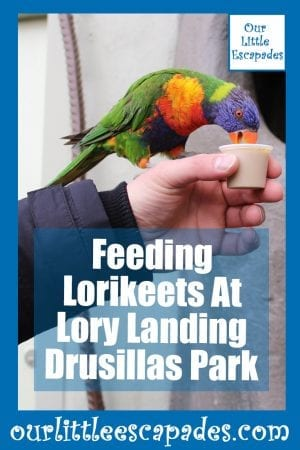 Feeding Lorikeets At Lory Landing Drusillas Park
