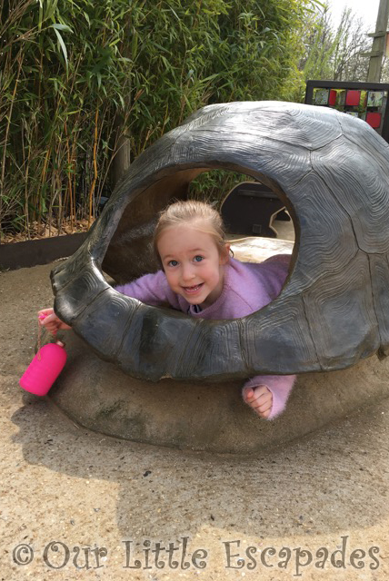 little e tortoise shell girly trip to colchester zoo