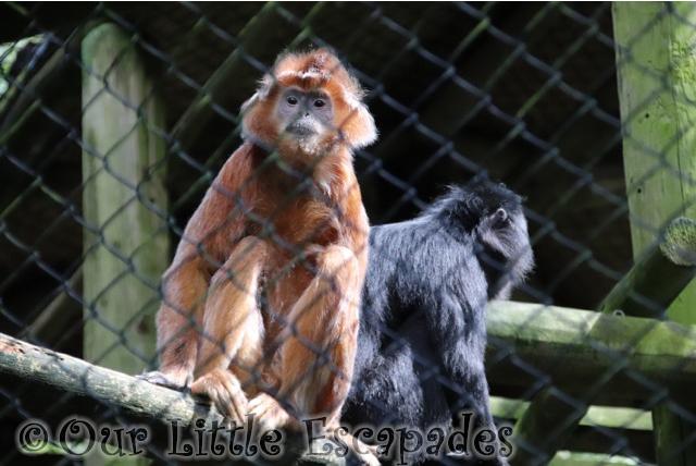 primate trail