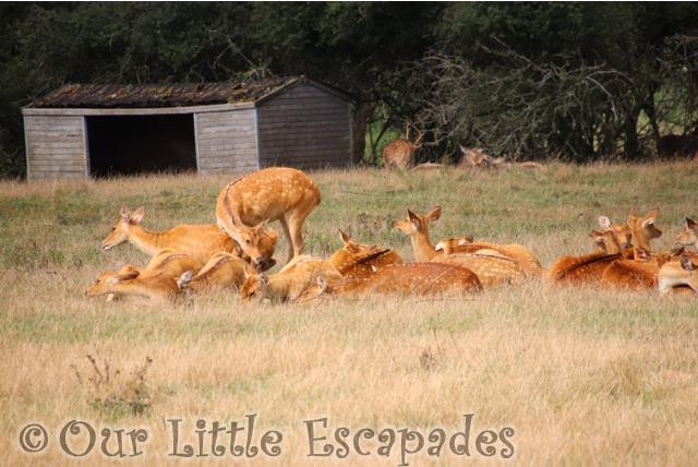 red lechwe port lympne safari asian experience