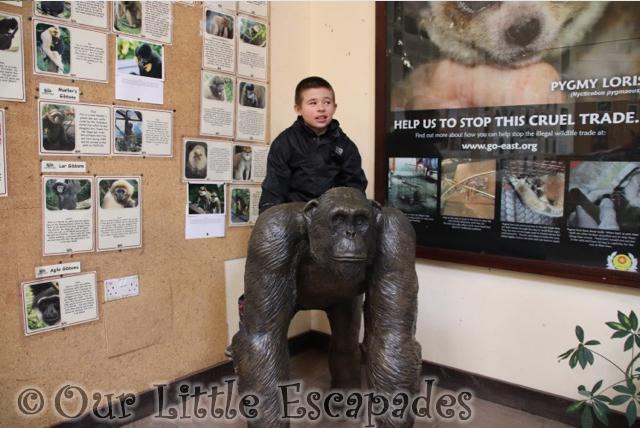 ethan chimpanzee statue monkey world