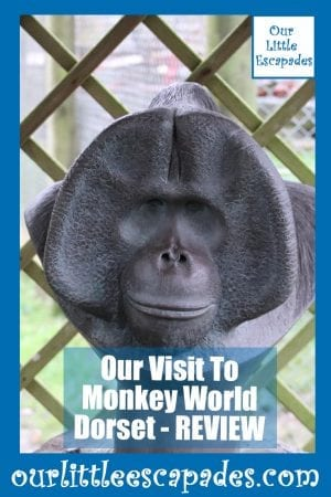 Our Visit To Monkey World Dorset REVIEW