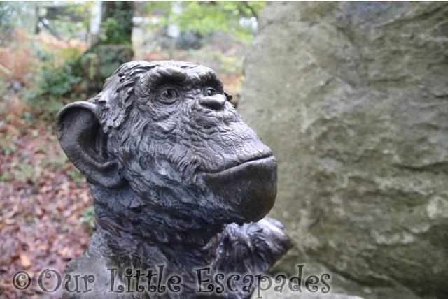 chimpanzee jim cronin memorial monkey world dorset