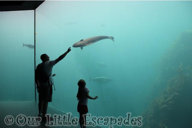 darren little e atlanterhavstanken atlanterhavsparken alesund norwegian aquarium