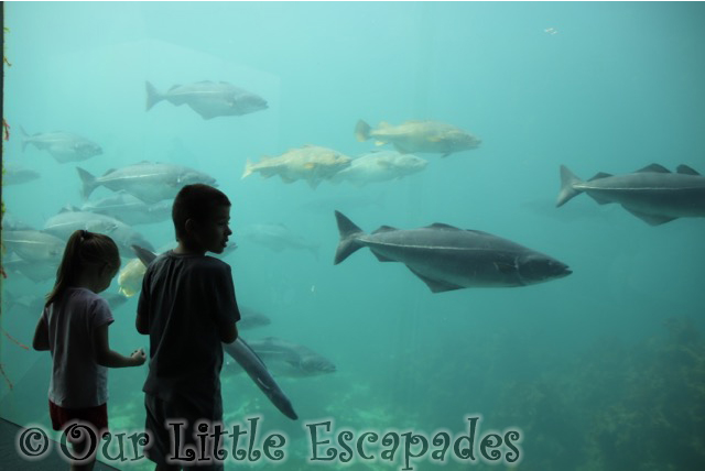 ethan little e atlanterhavstanken atlanterhavsparken alesund norwegian aquarium