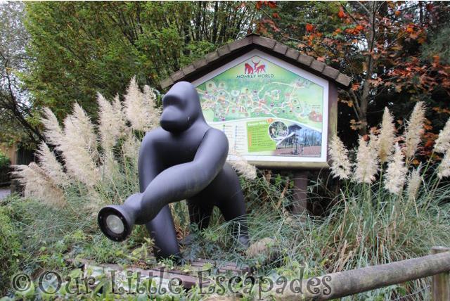 gorilla lamp map monkey world dorset