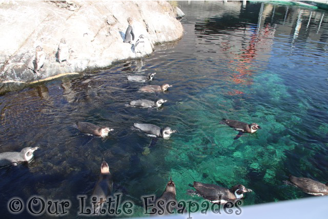 penguins atlanterhavsparken alesund