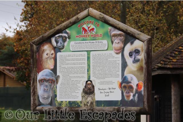 welcome monkey world dorset
