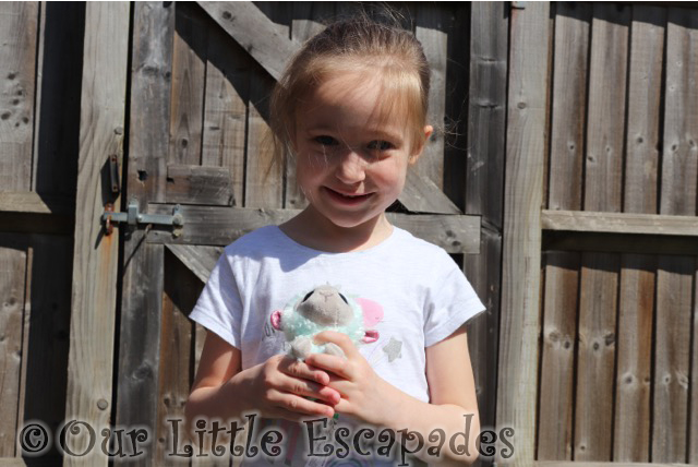 little e lamb